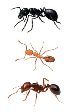 DRE pest control ants Cambridge